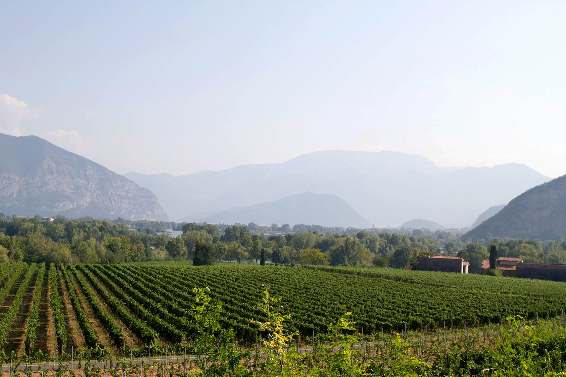 franciacorta wine vineyard salt and wind trip lombardy aida mollenkamp bitesee culinary trips